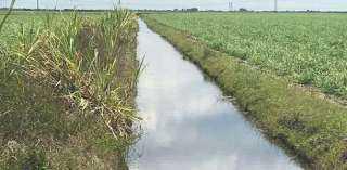 5 محظورات بقانون الرى الجديد.. إقامة مزارع سمكية بالمجارى المائية أبرزها
